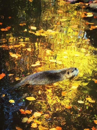 Animals Swimming