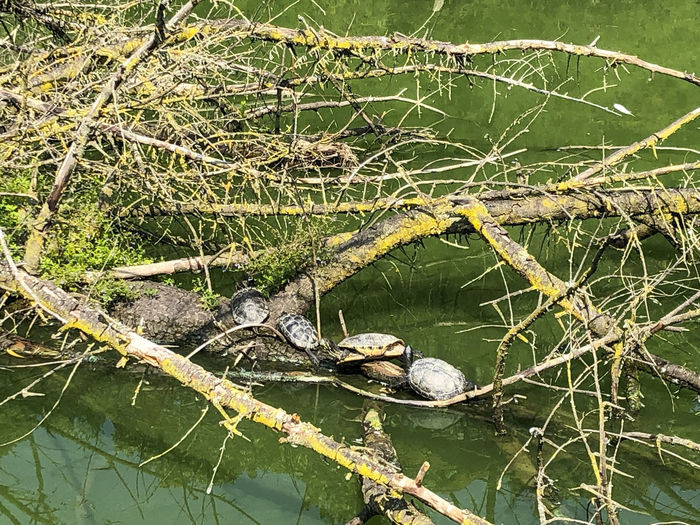 View of lizard on tree in lake