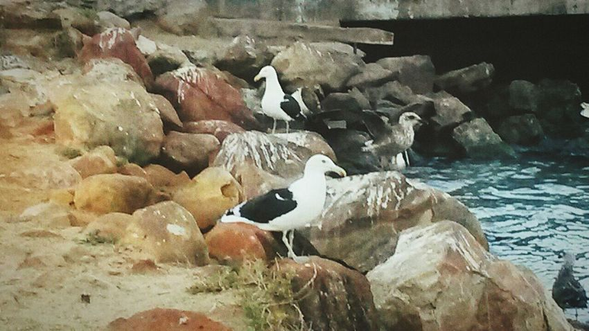 Never knew relaxing and watching the sea and birds can be so peaceful. Check This Out Sea Birds🐦⛅ Water Fresh Air... Sunshine ☀ Seagull Rocks