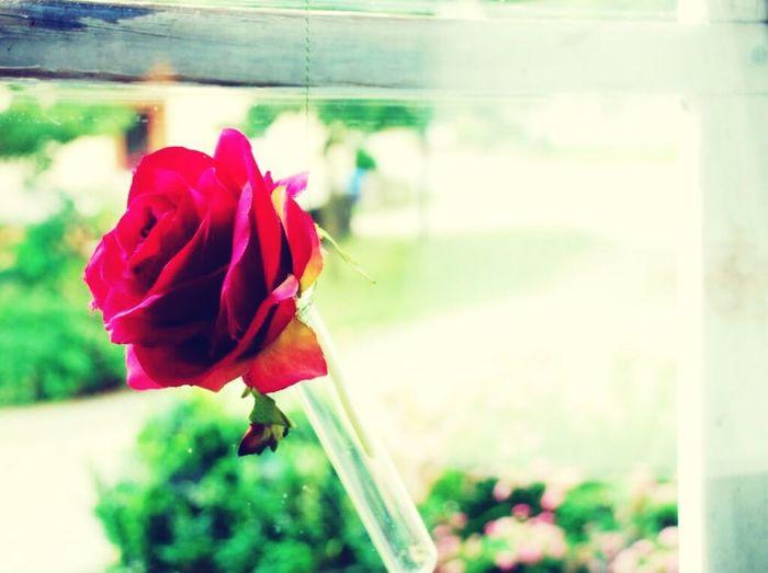 Roses Mood Lonely Wishyouwerehere