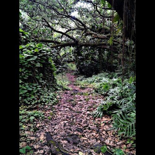 Trails Love_my_hawaii Bigislandlove Bike Slippahs Simplethingsmakemehappy 808love Beach_days Cruzin  Instapict Instahi Hawaiianpride Puna