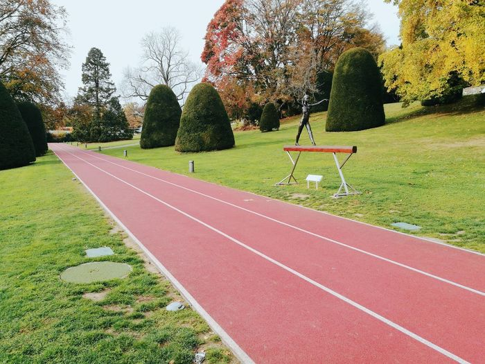 Tree Sports Track Running Track Grass Sky