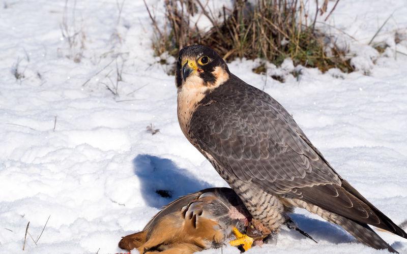 Close-up of bird on snow field