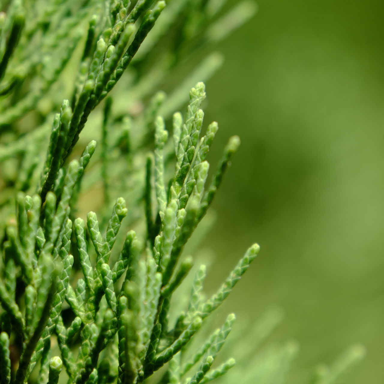 green color, growth, nature, plant, no people, freshness, backgrounds, close-up, beauty in nature, day, outdoors
