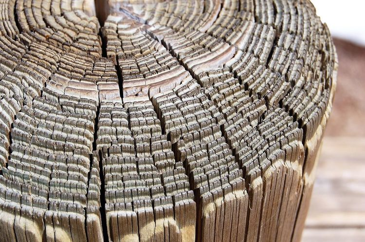Close up, Piling Close-up Concentric Day Nature No People Outdoors Piling Textured  Tree Tree Ring Tree Stump Wood - Material