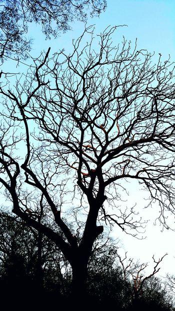 Lonely Tree Silent Forest Miss Someone เหงาเวลาเธอไม่อยู่