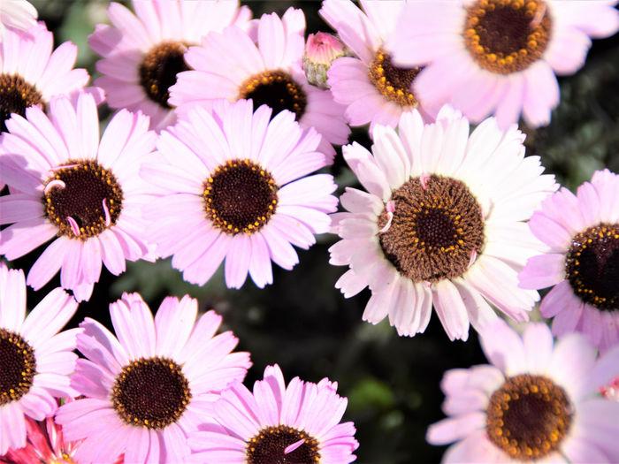 Ashikaga Flower
