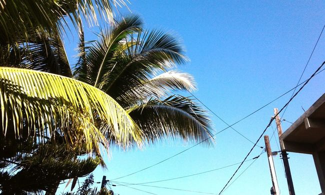 Blue Palm Tree Low Angle View Sky Day Nature Outdoors Growth No People Tree Beauty In Nature Close-up