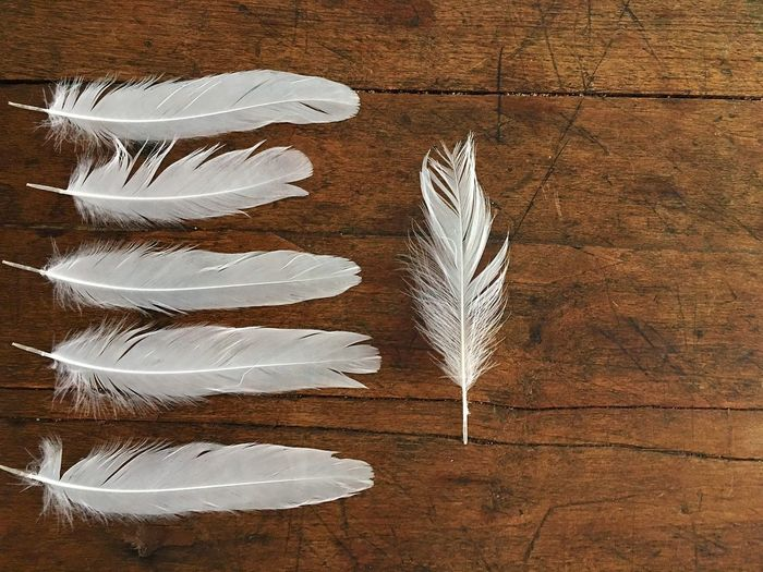 Directly Above Shot Of Feathers On Table