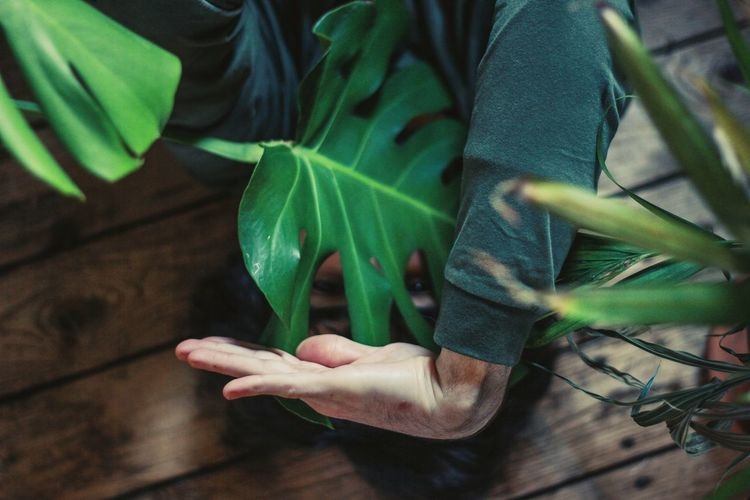 Plant Plants Floor Palm Leaf Nature Wooden Floor Human Body Part Human Hand Human Face Eyes Body & Fitness Dance Dancer Dancing One Person Indoors  One Man Only Men Human Hand Leaf Young Women Social Issues Close-up Green Color Palm Handprint Human Finger Finger Dance Floor Visual Creativity