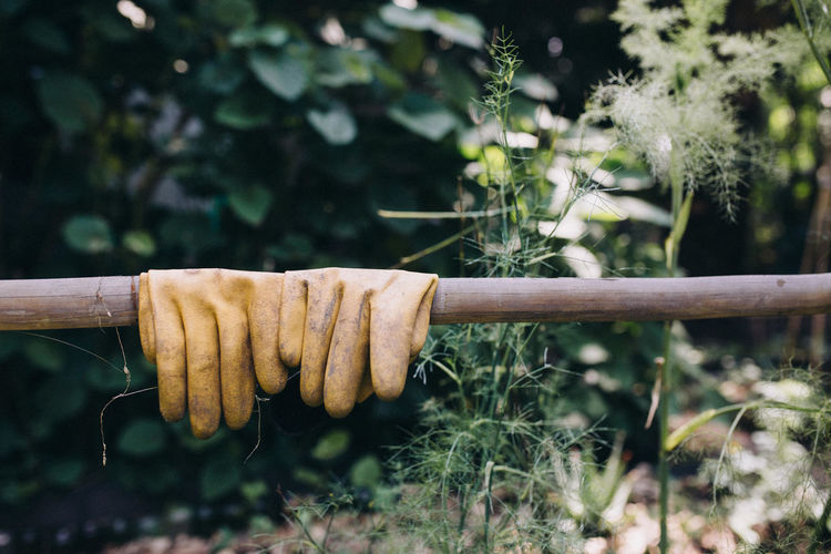 Close-up of gloves on bamboo by plants