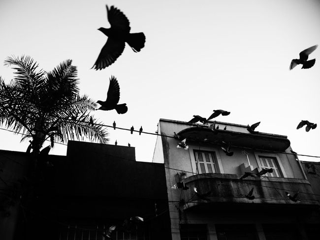 Birds in the city wires Bird Pigeon Black And White Nature City Wire Dramatic Group Of Animals Sky Low Angle View No People