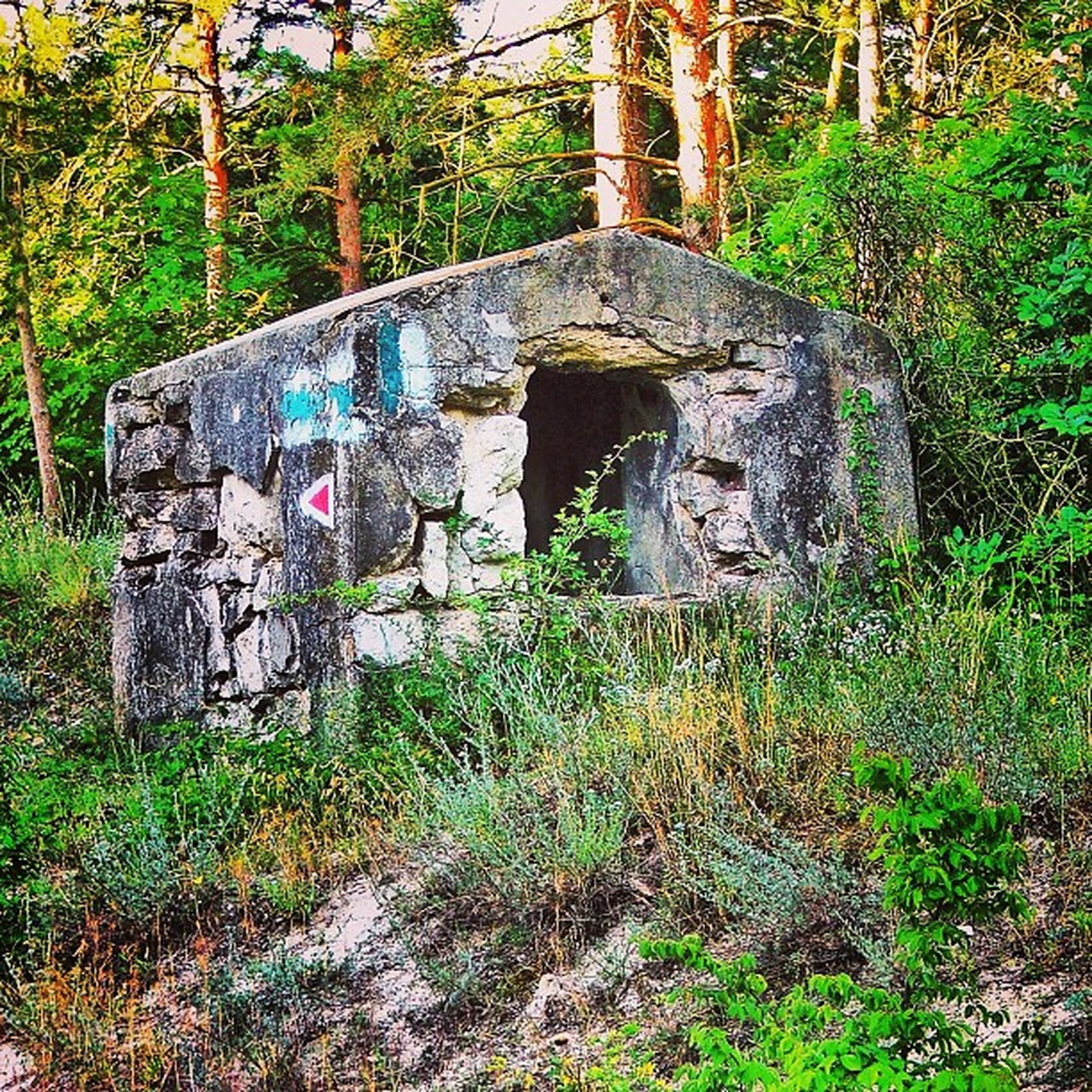built structure, plant, architecture, tree, growth, abandoned, grass, green color, old, forest, stone wall, nature, damaged, day, weathered, no people, building exterior, tranquility, outdoors, moss