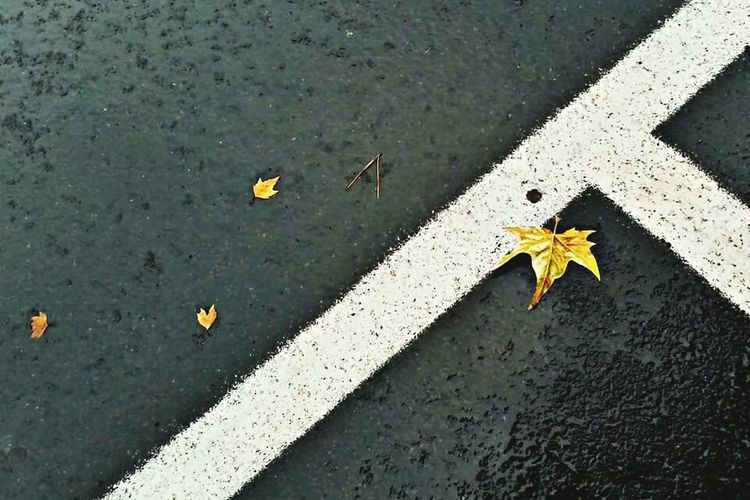 Streetphotography Natureandbuilding Leaves Asphalt