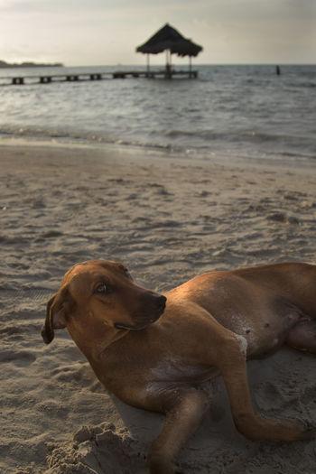 Dog resting on beach
