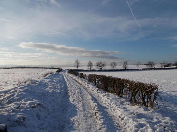 Winter Wonderland Winter Wonderland ❄