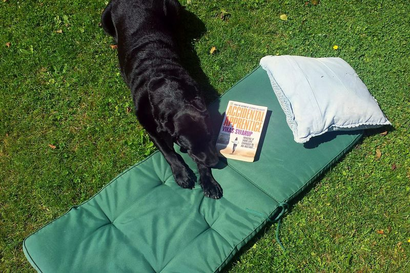 What's in a Saturday, you ask? Feet in damp grass, wet nose on cheek, book in hands and neighbours blasting Elvis. Not half bad at all Showcase July Summer Labrador