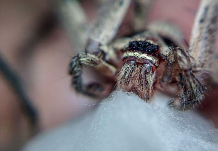 HuntsmanSpider Jumping Spider Insect Spider Close-up Arachnid Web EyeEmNewHere