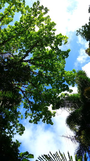 Australia Beauty In Nature Branch Cloud - Sky Daintree Daintree Rainforest Day Forest Green Color Growth Idyllic Leaf Leafs Low Angle View Nature No People Outdoors Peace And Quiet Place Of Worship Rainforest Sky Tranquility Tree Tree Tree Crowns