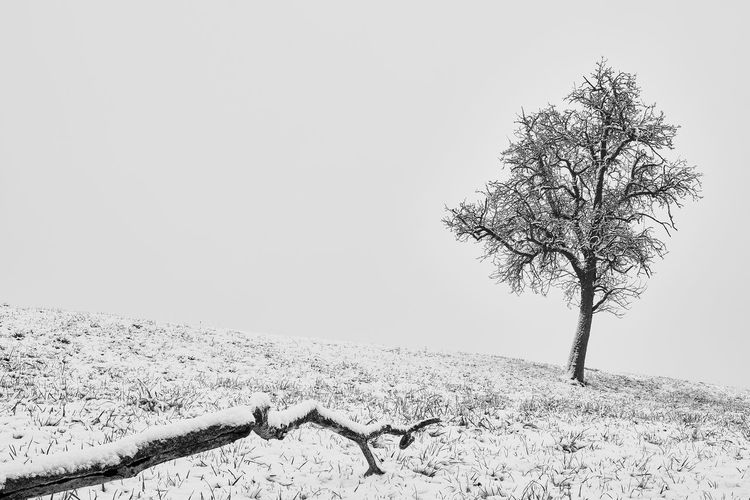 Keep it simple Zürich Beauty In Nature Black And White Blackandwhite Photography Branch Clear Sky Cold Temperature Day Field Landscape Lone Mood Nature No People Outdoors Scenics Sky Snow Switzerland Tranquility Tree Winter