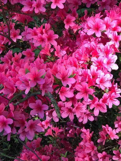 Flowers Beauty In Nature Flower Flowering Plant Plant Beauty In Nature Freshness Pink Color Growth Fragility Flower Head No People Botany