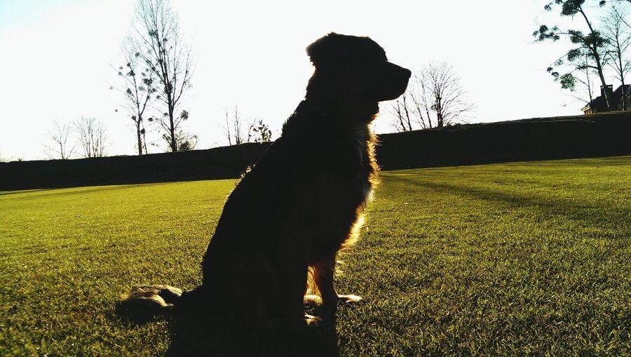 hello doggy Dog My Pet