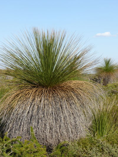 Ancient Botany Ancient Plants Botanical Botany Close-up Day Frond Garden Grass Grass Tree Green Color Nature Needle - Plant Part No People Old Plant Families Plants Pre-Historic Plants
