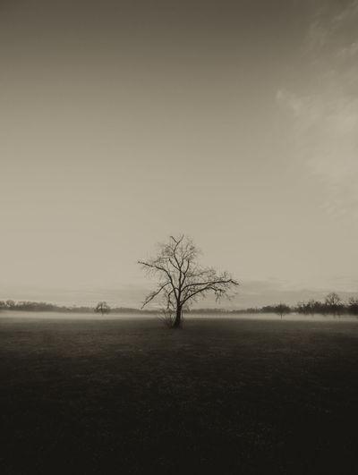 #Thoughtful #blackandwhite #bw #lonely #lonelyness #nostalgia #nostalgic #reflections #tree