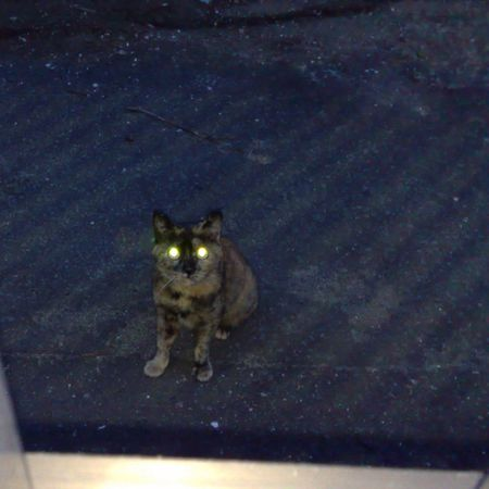 Laser Cat Laser Eyes Cat Cat Lovers