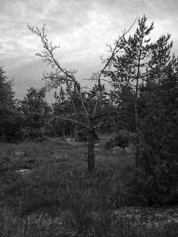 Trees Midsummer Midsommar Midnight EyeEm Best Shots - Black + White Blackandwhite Eye4photography  EyeEm Best Shots Nature