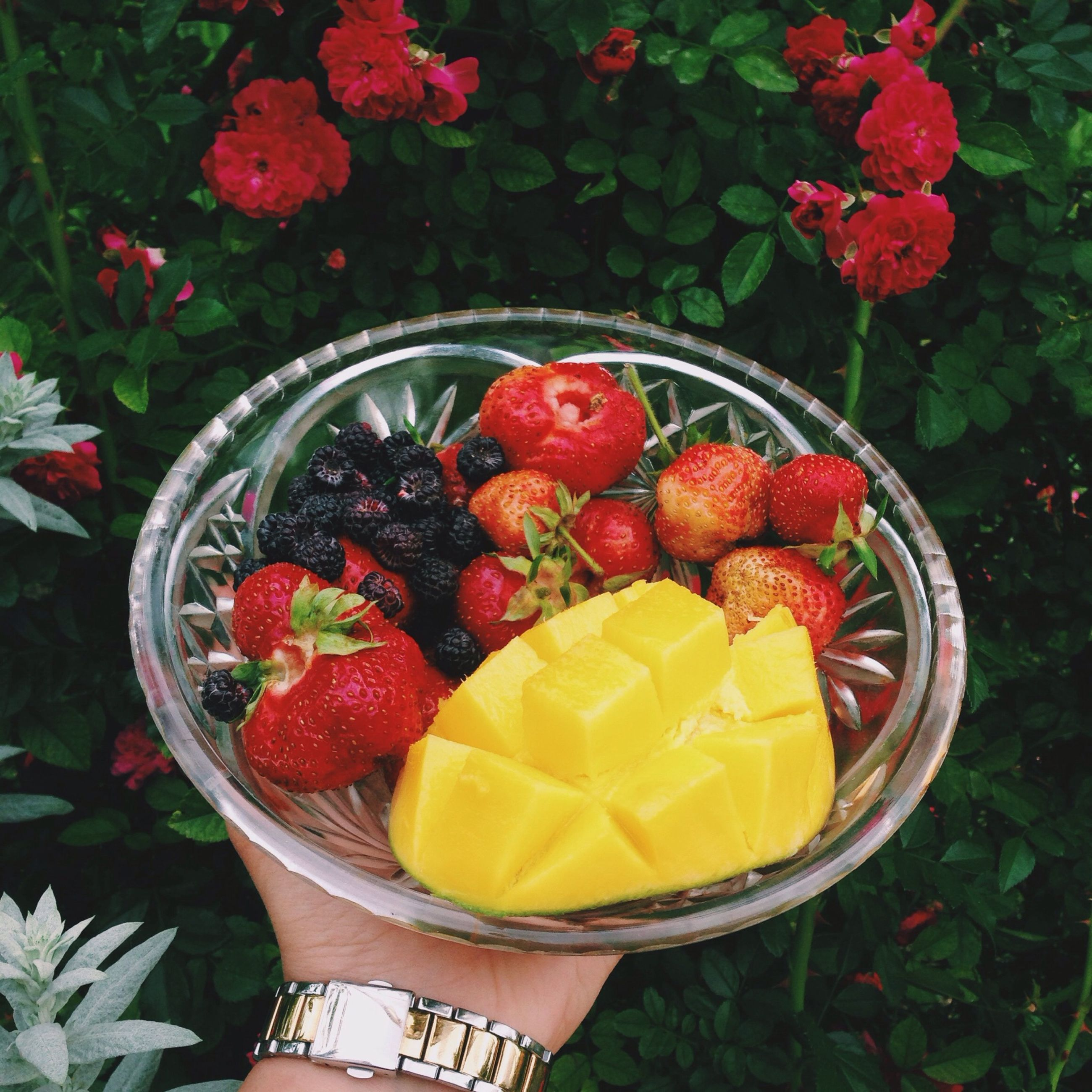 food and drink, food, freshness, fruit, holding, healthy eating, person, lifestyles, strawberry, red, leisure activity, personal perspective, unrecognizable person, high angle view, part of, ripe