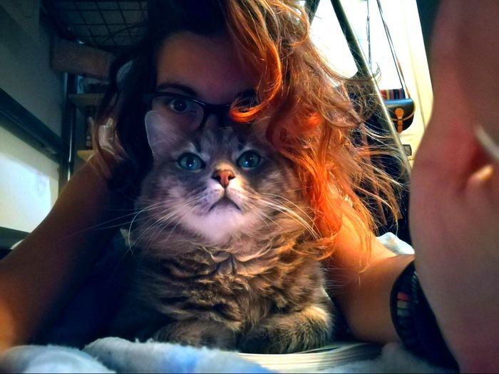 Cat Gattone Occhi Eyes Red Color Love