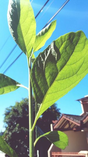 lives Leaf Tree Banana Tree Sky Close-up Plant Green Color