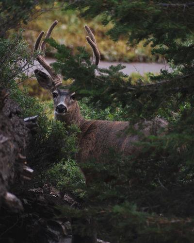 Portrait of deer seen through plants in forest
