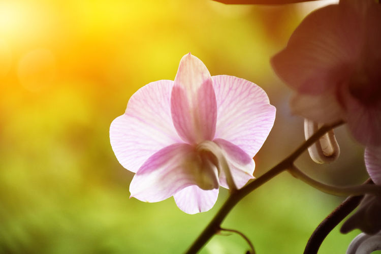 Orchids on