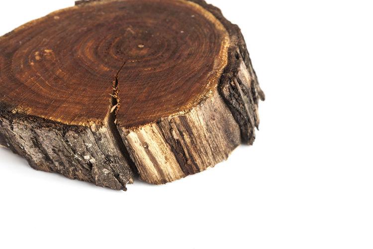 Felled Tree Slice. Wood Texture. Isolated On White Background