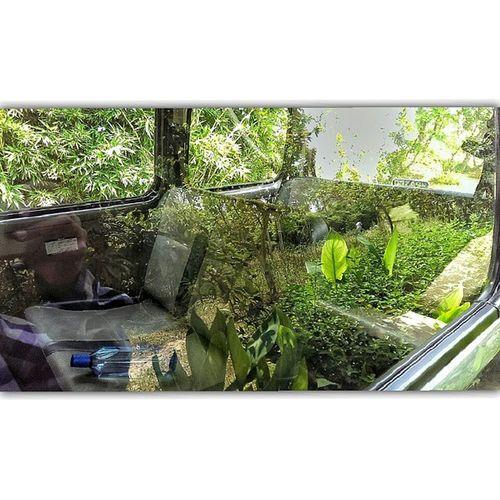 HTC Htcclick Harshlight Nature Gardnerbackyard