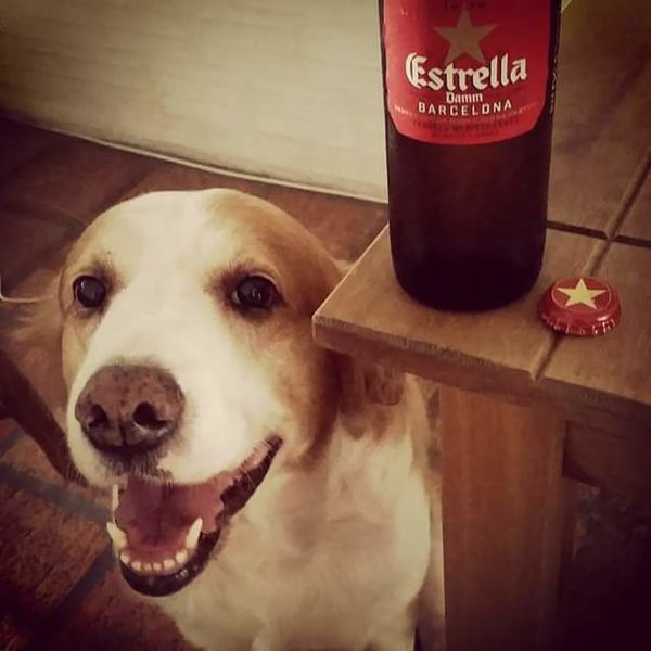 My dog Dog Love Dogslife Beer Time Dog❤ Dogoftheday