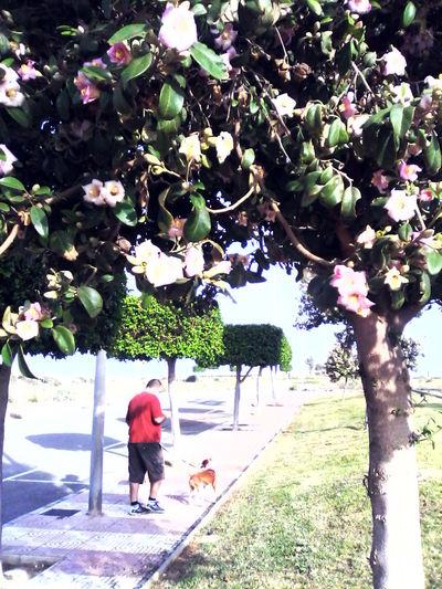Paseando El Perro Flores CalleArbol. Perro Dog Dog Love Walking