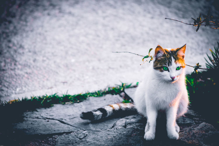 Cat sitting on footpath during winter