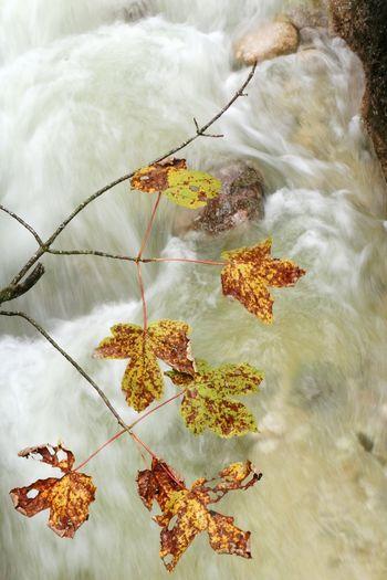 Autumn Nature Beauty In Nature Water Power In Nature Flowing Water Bavaria Autumn Nature Photography Herbst Klamm Almbachklamm Berchtesgaden Nationalpark Berchtesgaden Tranquility River Tranquil Scene Beauty In Nature Growth