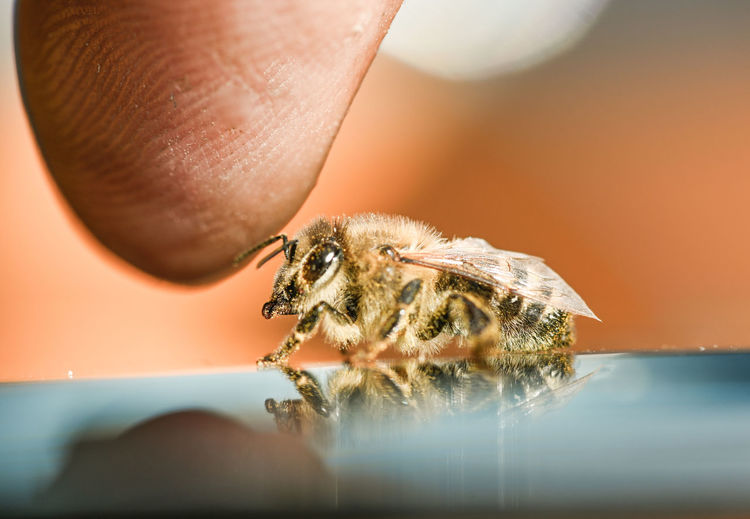bee and finger
