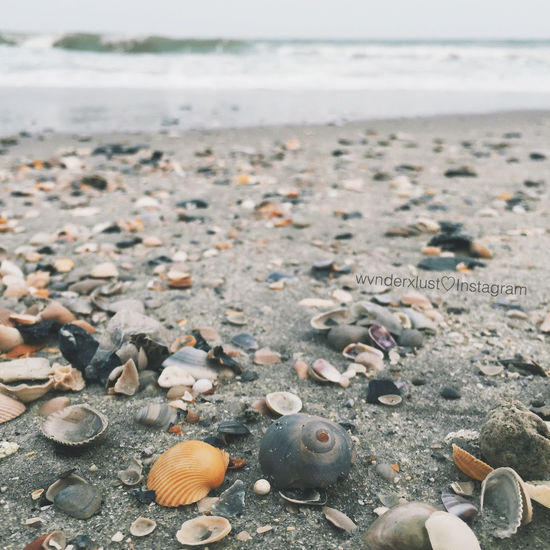 Shell hunting. 🐚🐚 Myrtlebeach Shell Shell Hunting Myrtle Beach Hanging Out Check This Out Taking Photos Enjoying Life