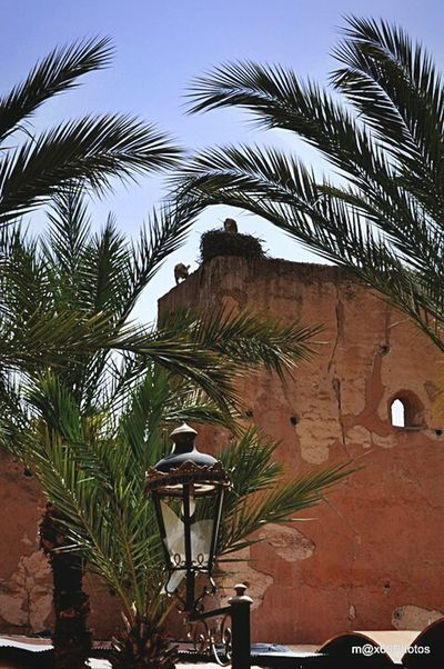 Taking Photos Cicogna Marocco Check This Out Colourful Marocco
