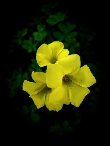 Flower Yellow Flower Head Nature Petal Freshness Beauty In Nature Close-up Plant Fragility No People Outdoors Day