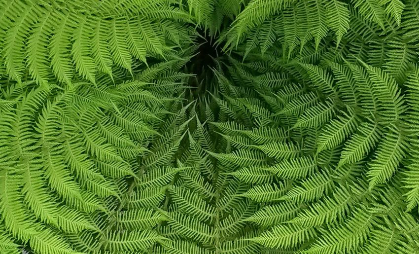 Bracken leaves in circular shape