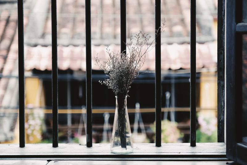 Close-up of flower on glass window
