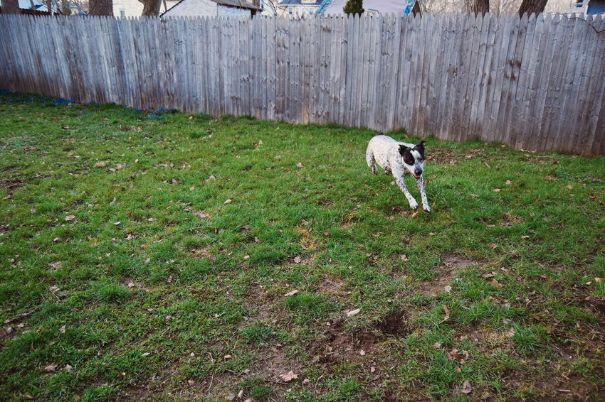Things I Like Urban My Neighborhood My Home VSCO Photography In Motion Urban Spring Fever At Home Black And White Dog Dog Dogs Having Fun Laugh Showcase April Nature's Diversities The Essence Of Summer BYOPaper! Place Of Heart Pet Portraits