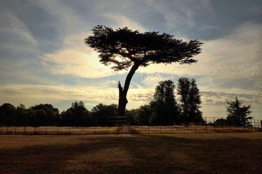 Tree Sunrise Nature EyeEm Nature Lover
