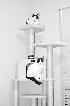Hangin out. Cats